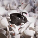 one black swan amongst a bank of white swans